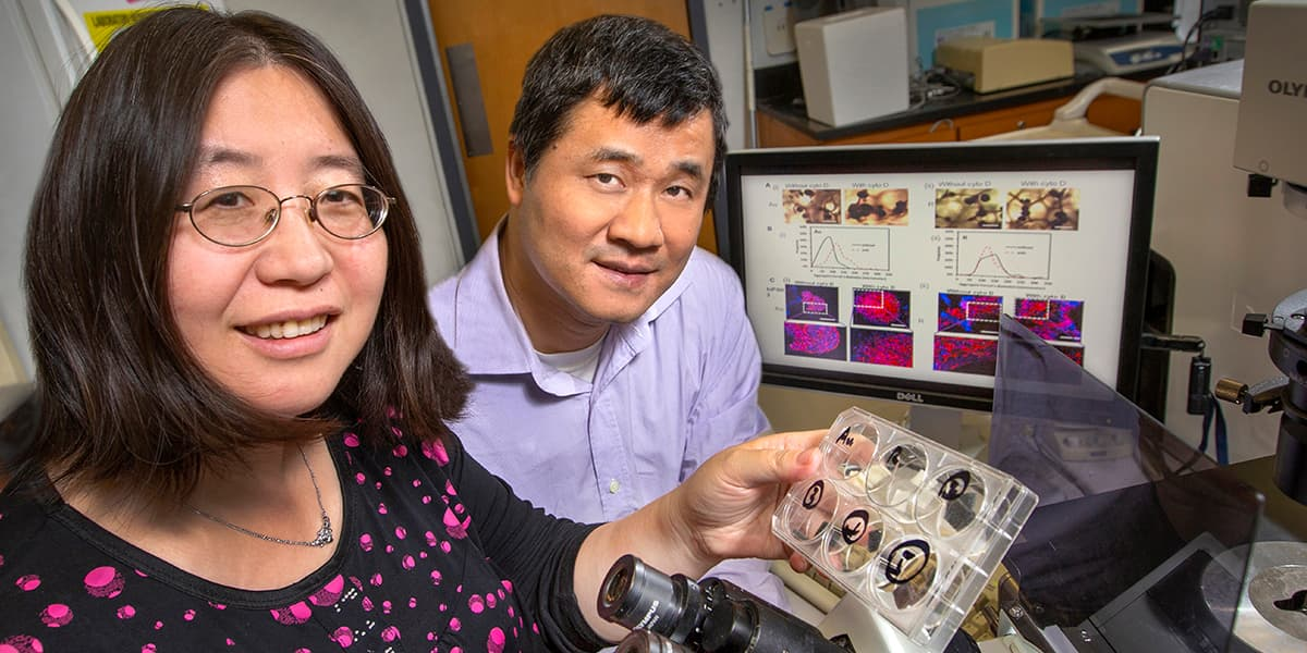 Researchers Yan Li, left, and Changchun Zeng are using auxetic foam to explore ways to better control the fate of stem cells.